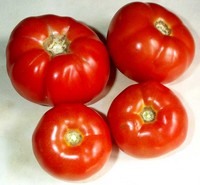 Tomatoes_standard